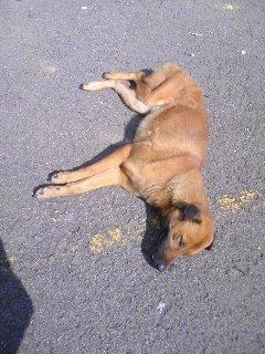 11犬_090125_1031~01.JPG