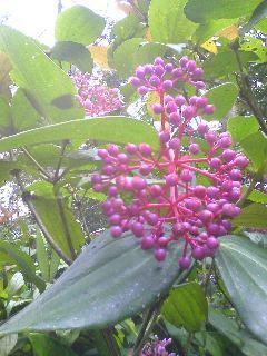 14植物園090125_1127~01.JPG
